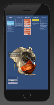A screenshot from CSAT's Anatomy of the Male Pelvis app for the iPad and iPhone, released in 2017.